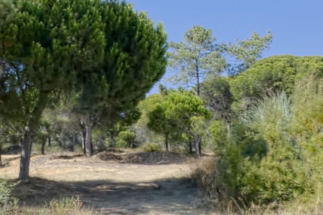 Land_for_sale_in_Quinta do Lago, Almancil, Vale do Lobo, Vilamoura, Quarteira_EMA12716